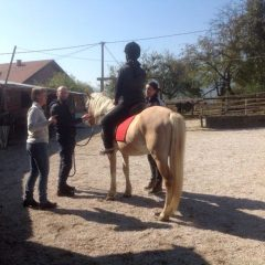 Fi Dent - Confident Equestrians
