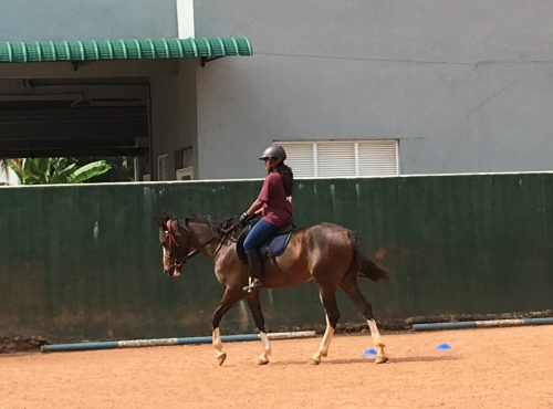 This year Fi went to Sri Lanka as a consultant and coach to the Sri Lankan Horse Association and Premadasa Riding School to give training and run clinics.